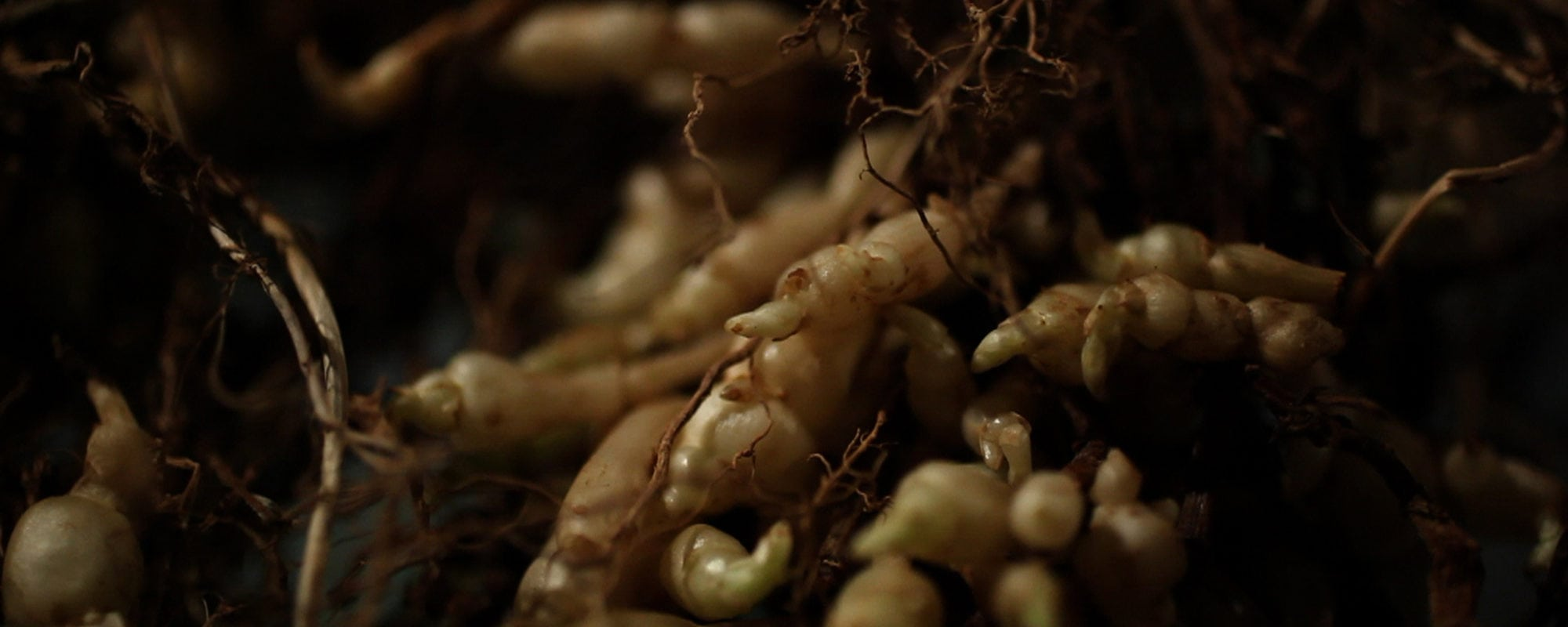Crosnes, rutabaga et épinards-fraises : des «raretés» au marché et sur Arte