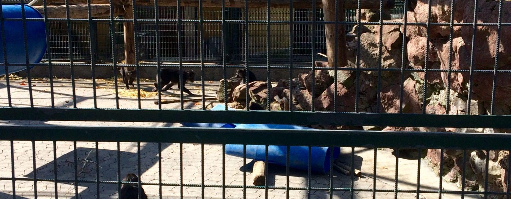 Au conseil municipal, l'avenir du zoo de l'Orangerie revient sur la table