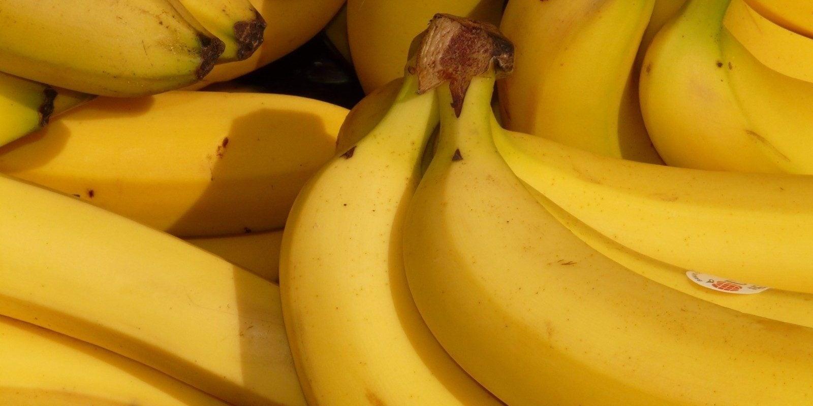 Avec la géothermie, peut-être des bananes cultivées dans l'Eurométropole de Strasbourg