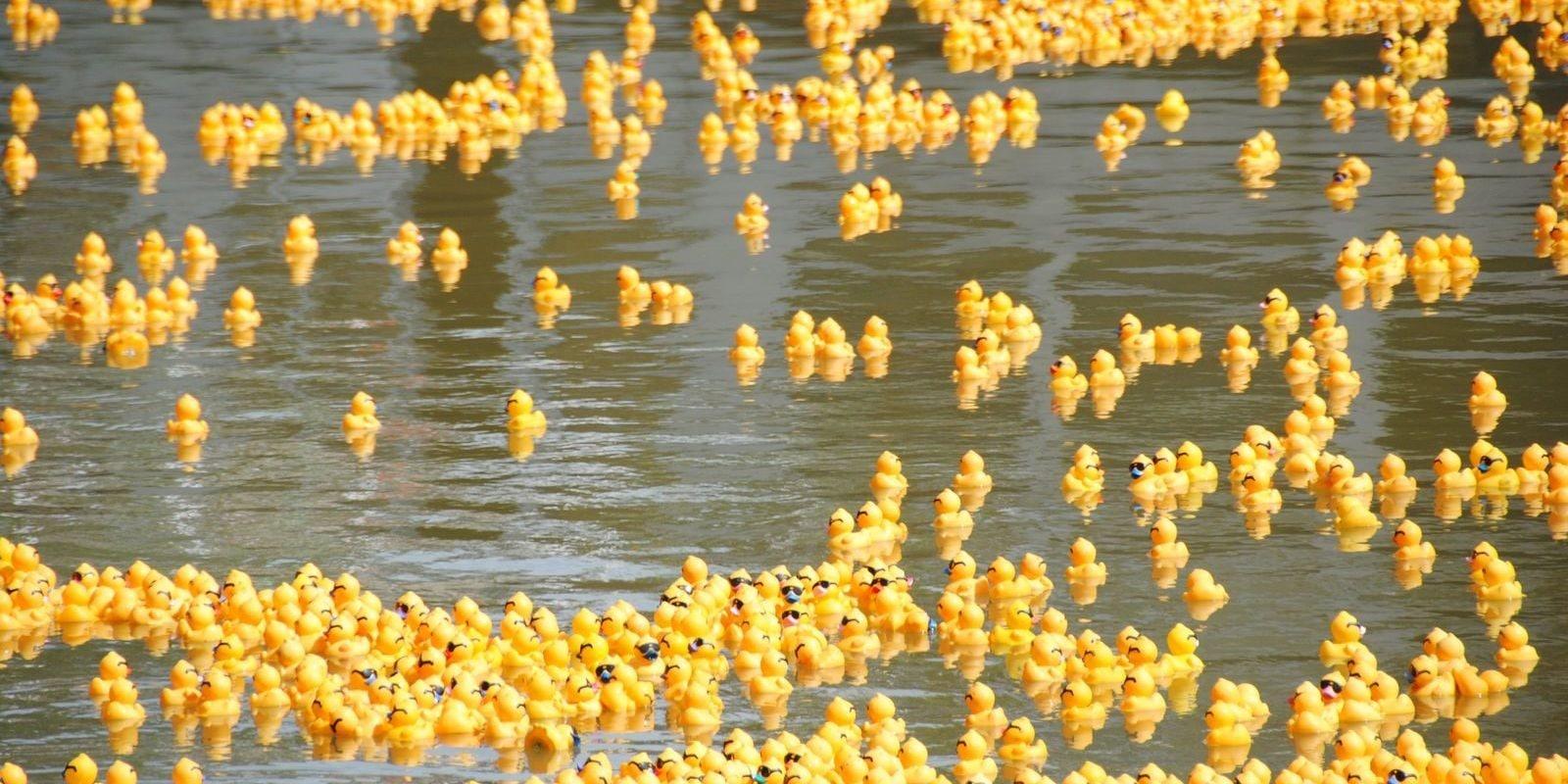 15 000 canards en plastique dans l'Ill pour fêter les 70 ans de Batorama