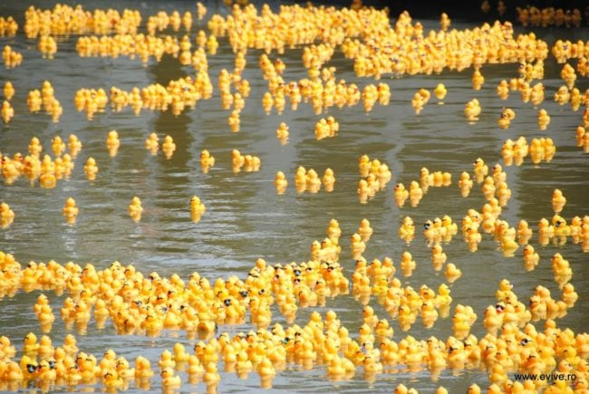 Une course de canards en plastique à Timisoara (Photo Evol.ro / FlickR / cc)