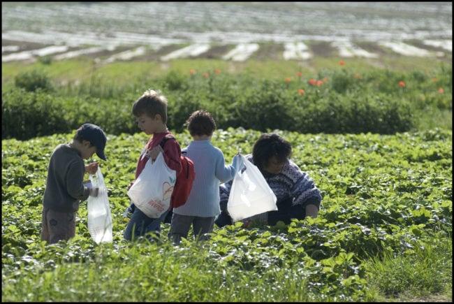 La libre cueillette, un bon moyen de reconnecter les enfants citadins à la terre. (crédit : Alain Bachellier / Flickr / cc)