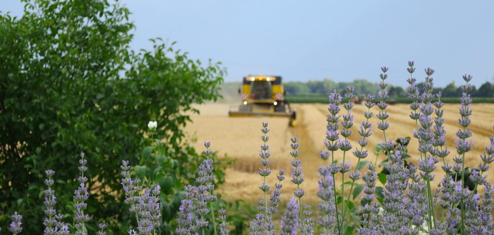 Jeunes agriculteurs : «Les aides à l'installation permettent à peine d'acheter un tracteur d'occasion»