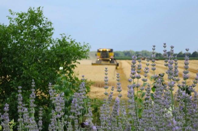 Entre 2007 et 2020, l'UE a déboursé 9,6 milliards d'euros d'aides visant spécifiquement les jeunes agriculteurs (Photo CS / Rue89 Strasbourg / cc)