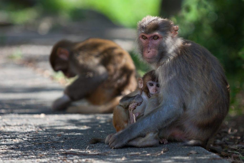 Commerce de singes de l'Université de Strasbourg: les responsables s'expliquent