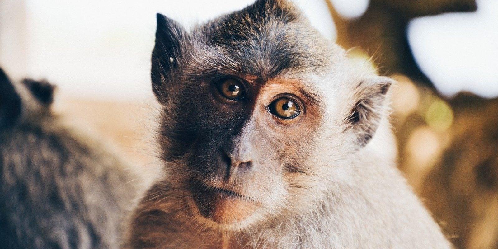Centre de primatologie : l'association dissoute dans l'urgence