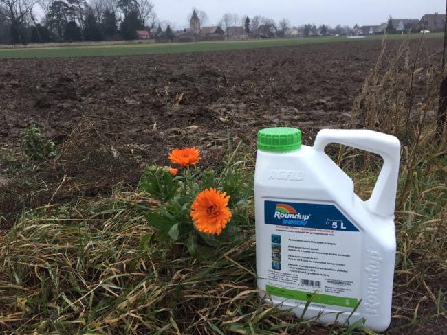 Herbicide total et systémique, le glyphosate est, à la différence d'une substance sélective, capable de détruire efficacement toutes les plantes. (Photo CS / Rue89 Strasbourg / cc)