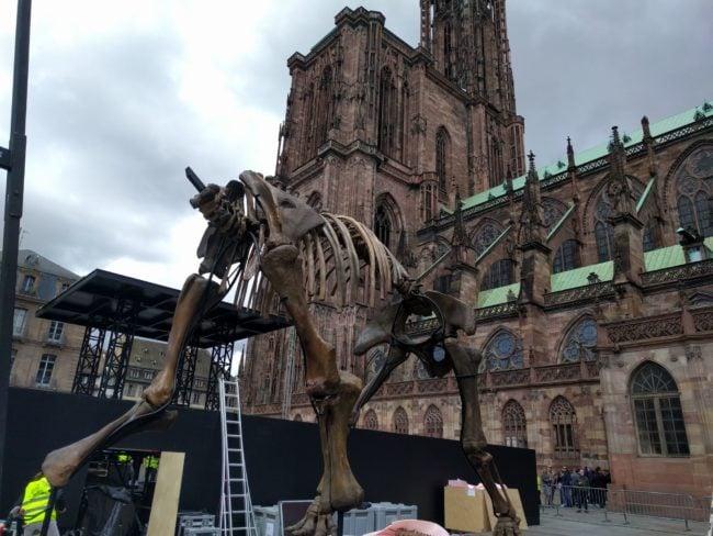 Le squelette a été monté dans la matinée (Photo PF / Rue89 Strasbourg / cc)