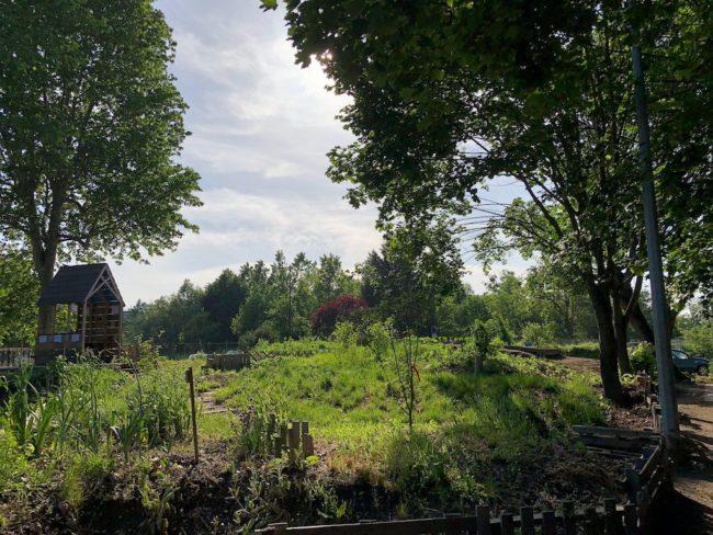 Le jardin participatif d'Apollonia une boufée d'air à l'entrée de la Robertsau restera public