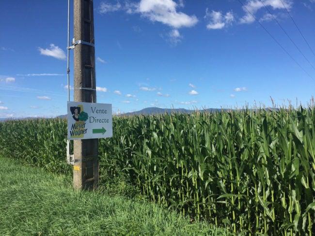 """L'IGP """"Choucroute d'Alsace"""" a été réclamée par le secteur pendant vingt ans. (Photo CS / Rue89 Strasbourg / cc)"""