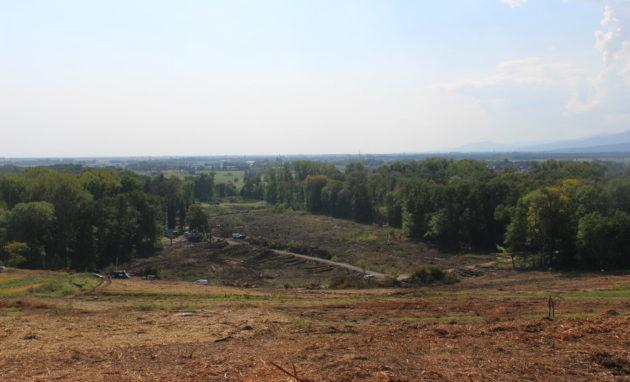 Les abattages ont été réalisés dans la forêt de Kolbsheim et sur le verger qui la surplombe, pour y faire passer un viaduc (photo JFG / Rue89 Strasbourg)