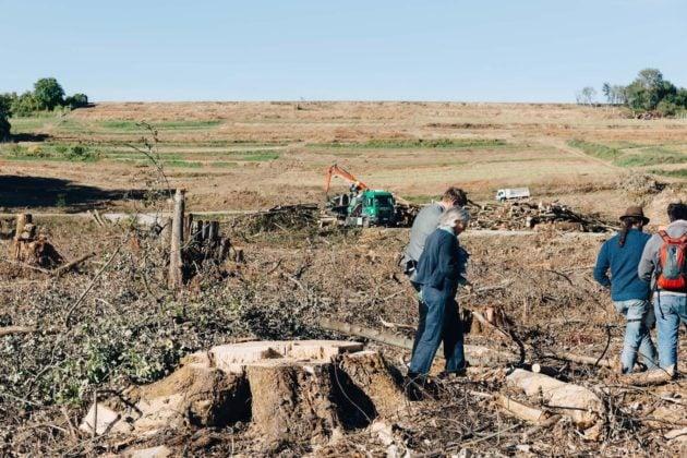 La forêt de Kolbsheim a été déboisée en septembre (photo Abdesslam Mirdass)