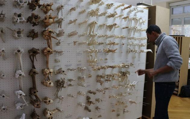 Ce qui intéresse le vulgarisateur scientifique, c'est aussi de toucher à la matière, au volume. Les coulisses du musée zoologique lui offrent un formidable terrain de jeux. (Photo DL/Rue 89 Strasbourg/cc)
