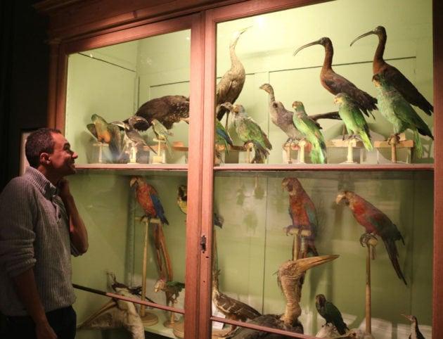 L'artiste-scientifique a nourri ses passions dans les couloirs du musée zoologique depuis tout petit (Photo DL/Rue 89 Strasbourg/cc)