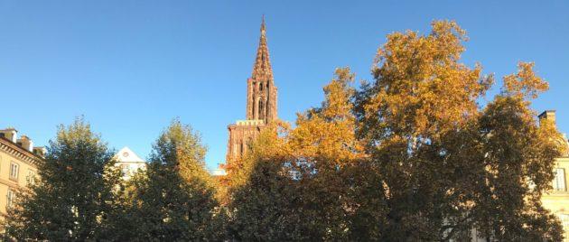 Chaleur et soleil en novembre, c'est inquiétant (Photo JC Anna)