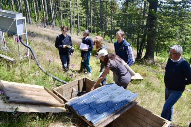 Dans les placettes expérimentales, les lessivats qui s'écoulent sous les arbres sont recueillis (doc remis)