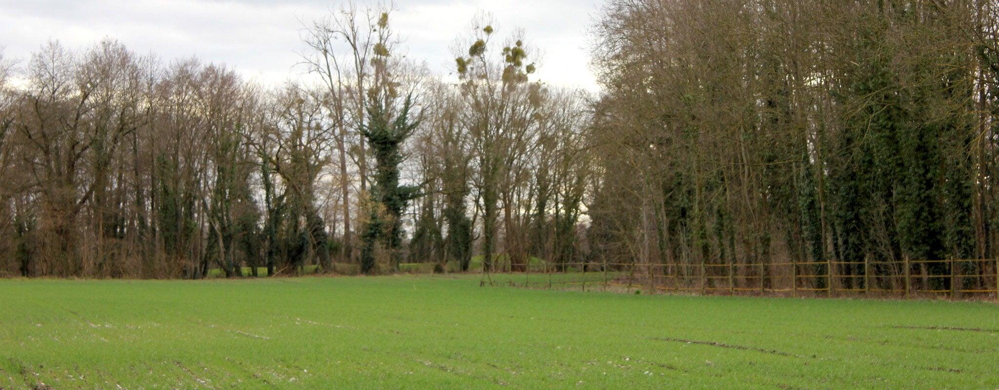 À Plobsheim, l'Eurométropole déroule un tapis vert pour Europa-Park