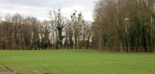 A Plobsheim, l'Eurométropole déroule un tapis vert pour Europa-Park