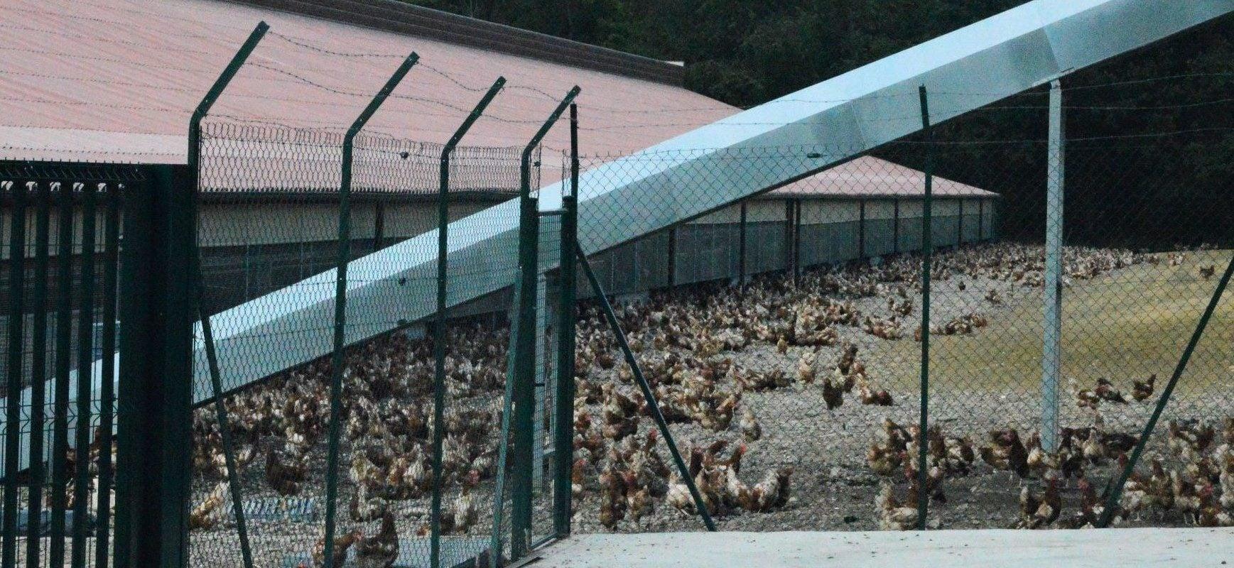 L'absurdité des élevages «plein air», des espaces vides et des poules agglutinées