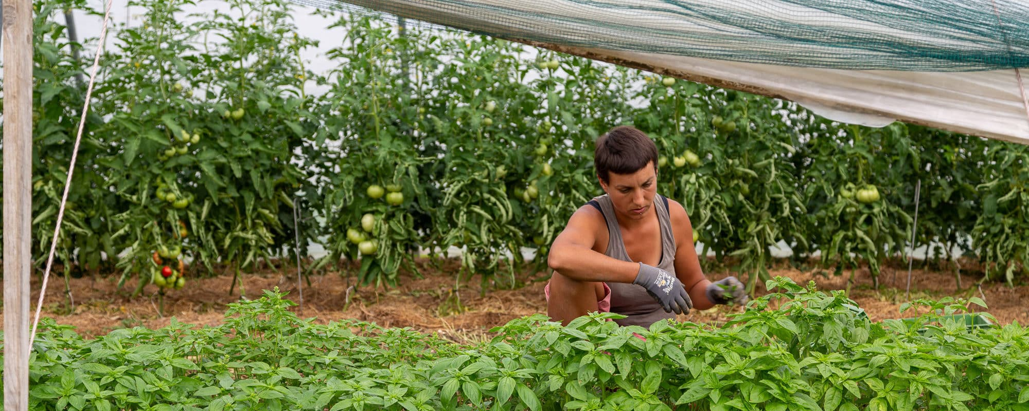 À Gartencoop, consommateurs et agriculteurs gèrent ensemble une ferme solidaire