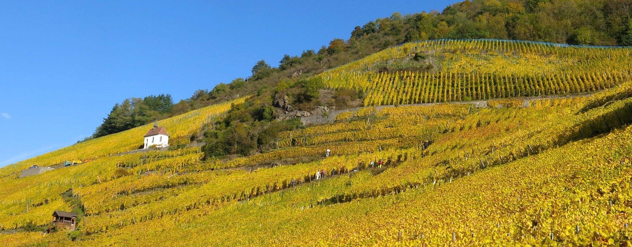 Les Vins d'Alsace à l'amende pour une entente et des consignes de prix pendant 38 ans