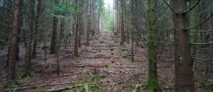 «Les plantations d'espèces exotiquesvont renforcer les effets du réchauffement climatique»