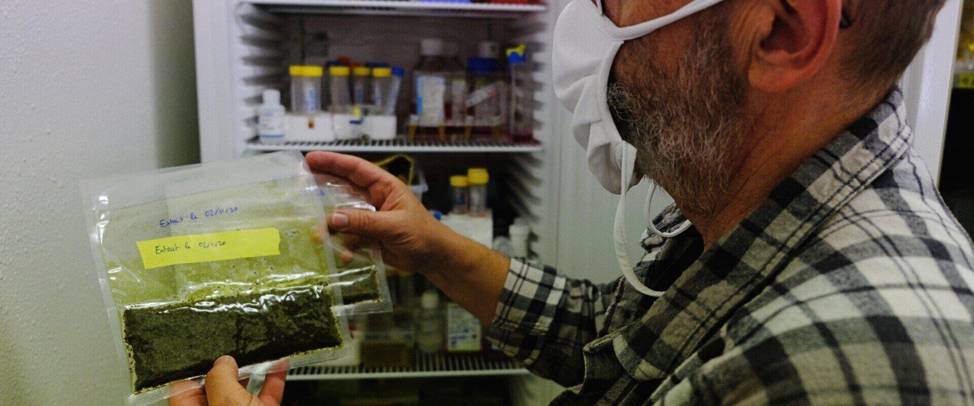 Avant-gardiste et réprimée: la filière alsacienne pour la légalisation du cannabis thérapeutique