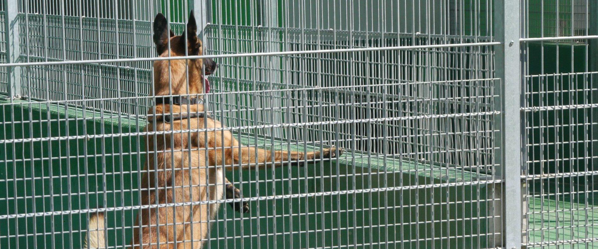 À la SPA Strasbourg: «À un moment de ma vie, je me suis sentie aussi abandonnée que ces animaux»