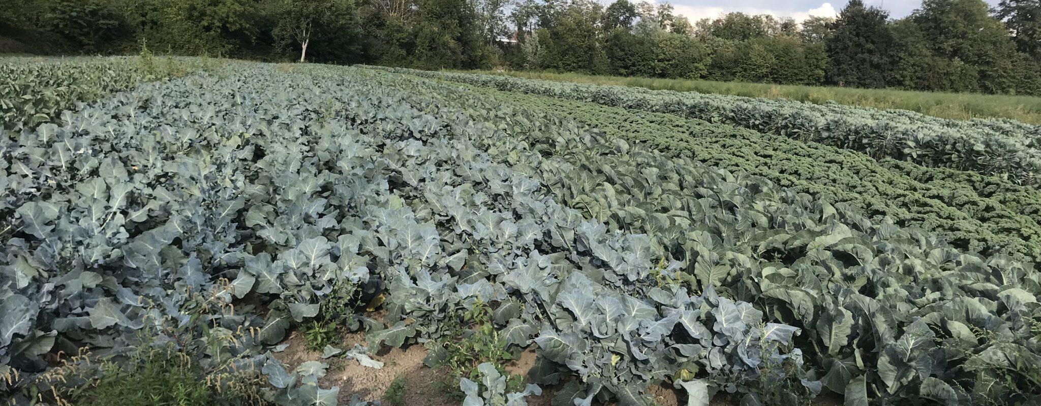 Au conseil de l'Eurométropole, la faible autosuffisance alimentaire de Strasbourg à améliorer